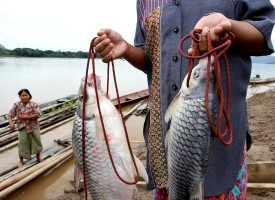 """Mekong Dam - The """"Mother of water"""" and the Chinese dams - 1st story"""